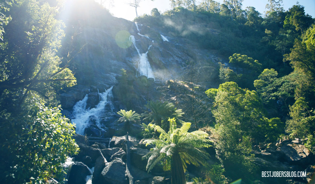 cascades tasmanie