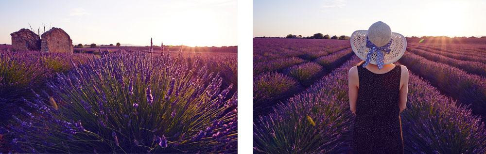 Plateau de valensole en Provence