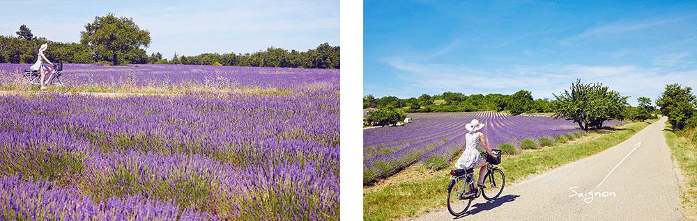 location vélo en provence