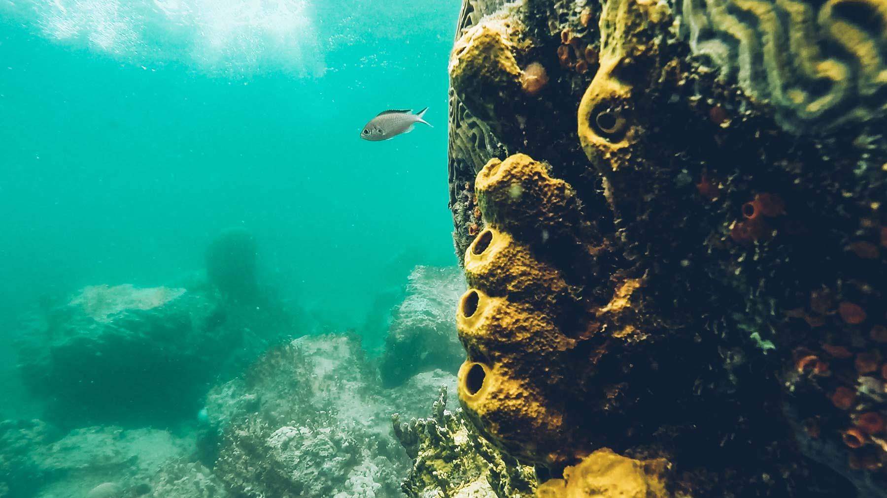 Plongee et Snorkeling en Guadeloupe
