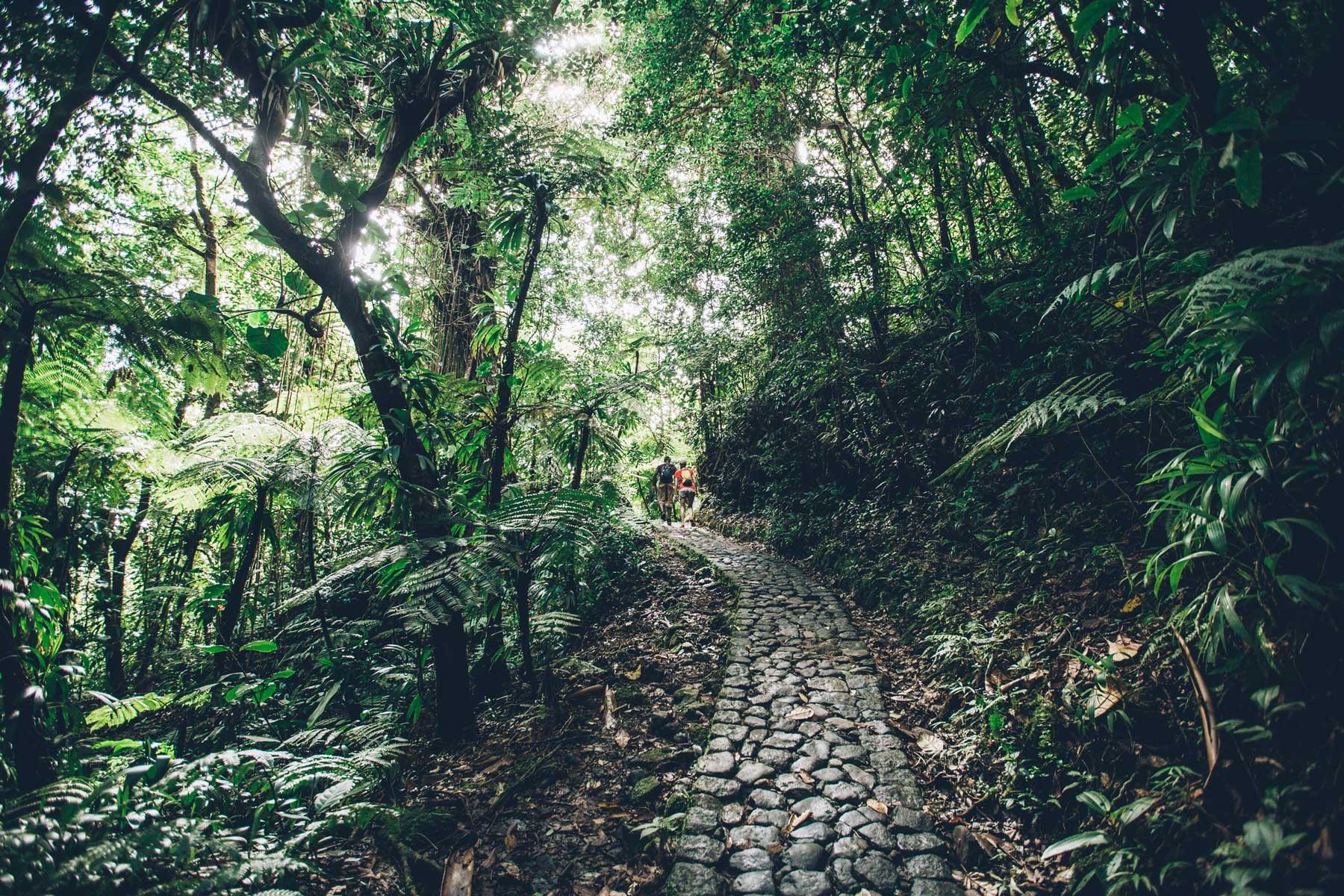 Randonnée La Soufriere, Guadeloupe