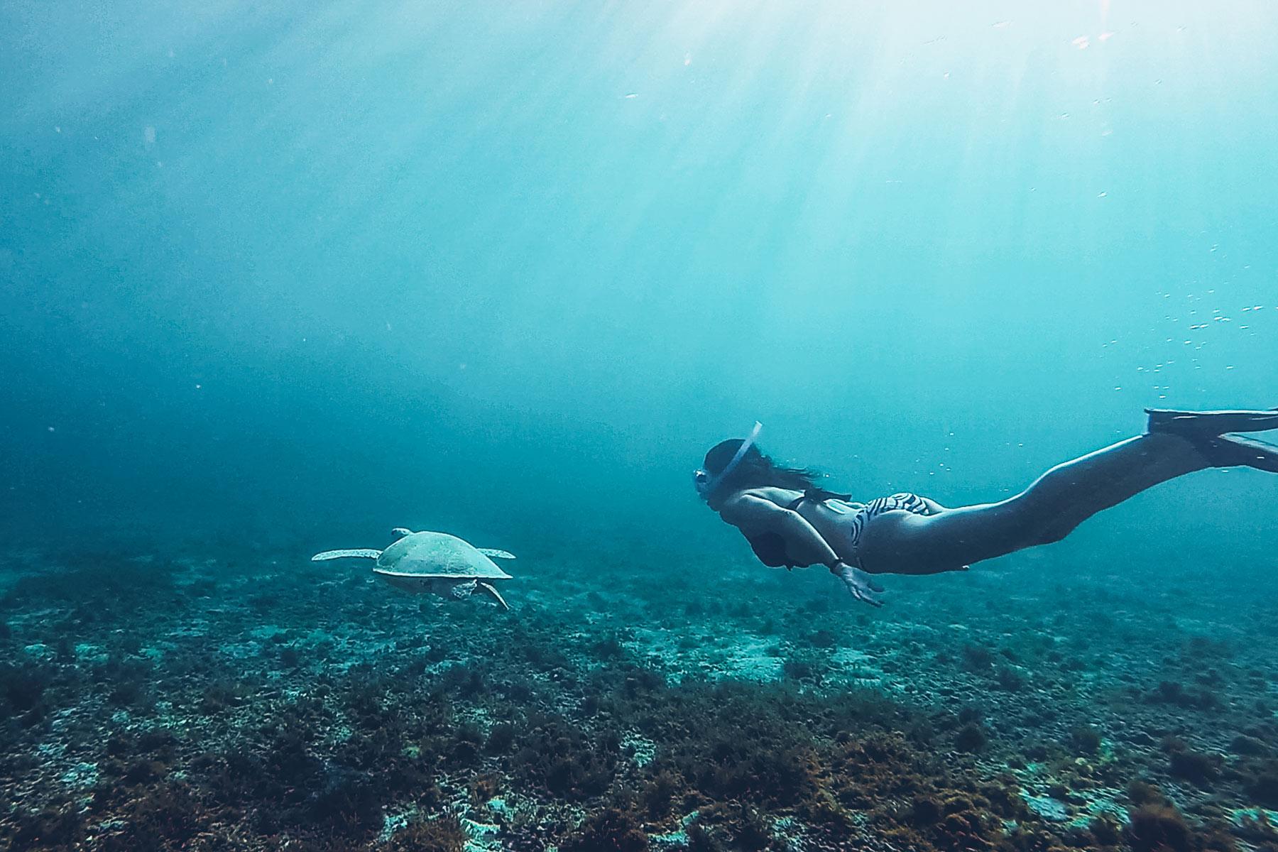 Nager avec les tortue en Guadeloupe, Petite Terre