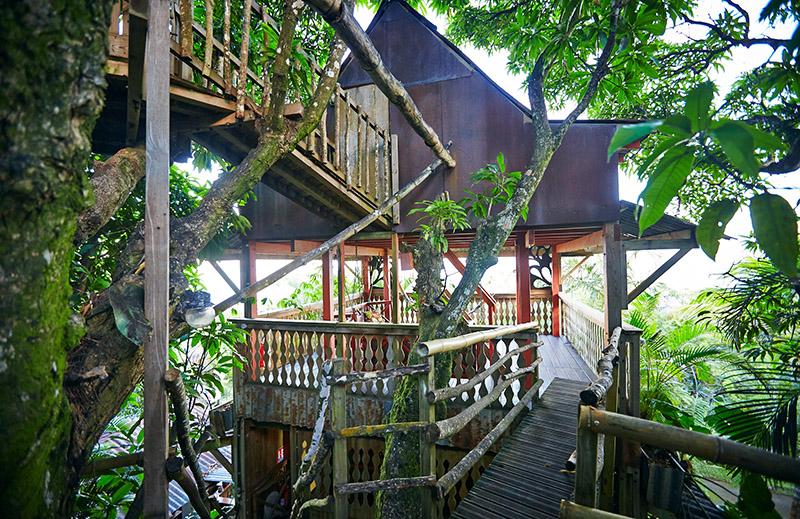 cabane dans les arbres guadeloupe
