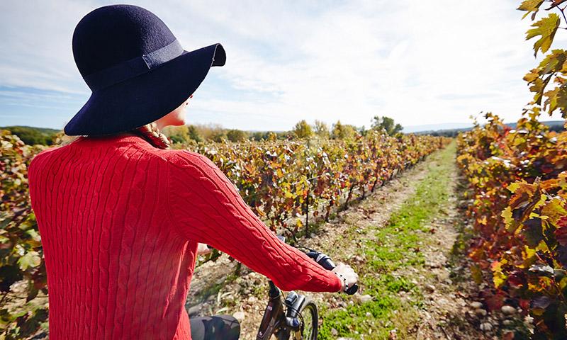 velo dans les vignes vaucluse