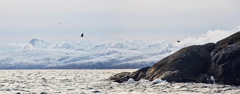 aigle norvege