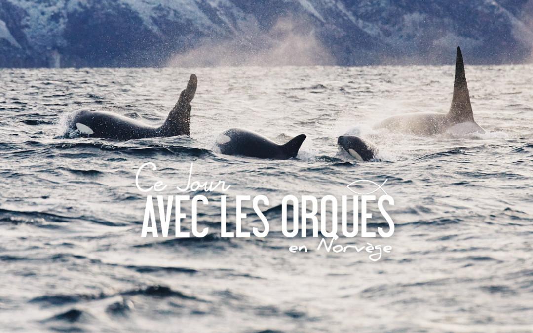 NORVÈGE | CE JOUR AVEC LES ORQUES