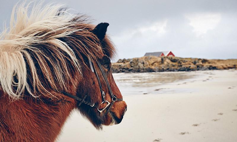 ou faire du cheval en norvege
