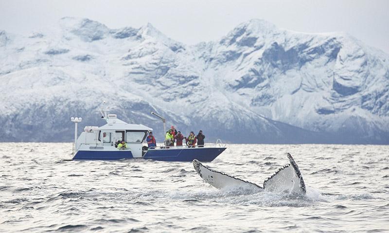 sortie baleine tromso