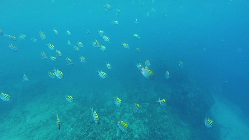 islas marietas mexique puerto vallarta