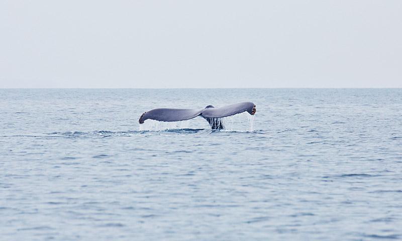 ou voir les baleines mexique
