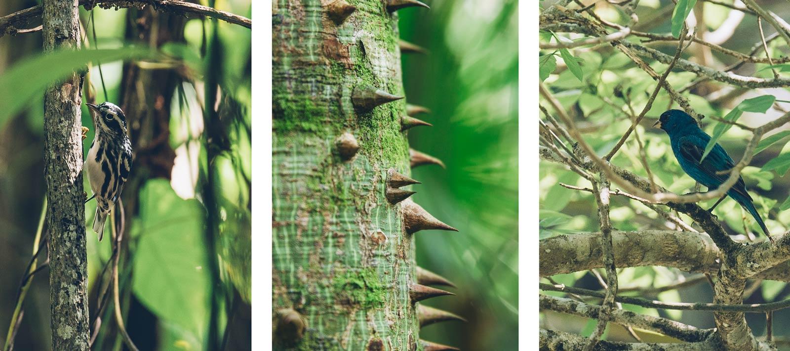 Réserve naturelle Sian Kaan, Tulum, Mexique