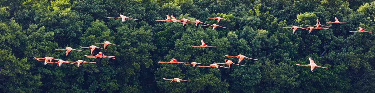Celestun-Flamants-roses