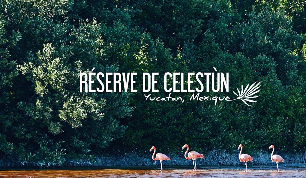 Reserve de Celestun, Mexique
