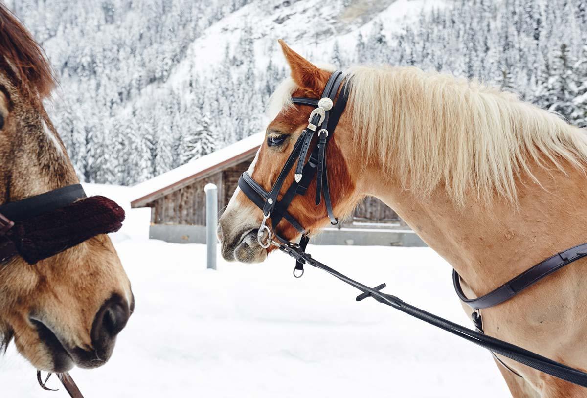 Chevaux-ski-joering-Suisse