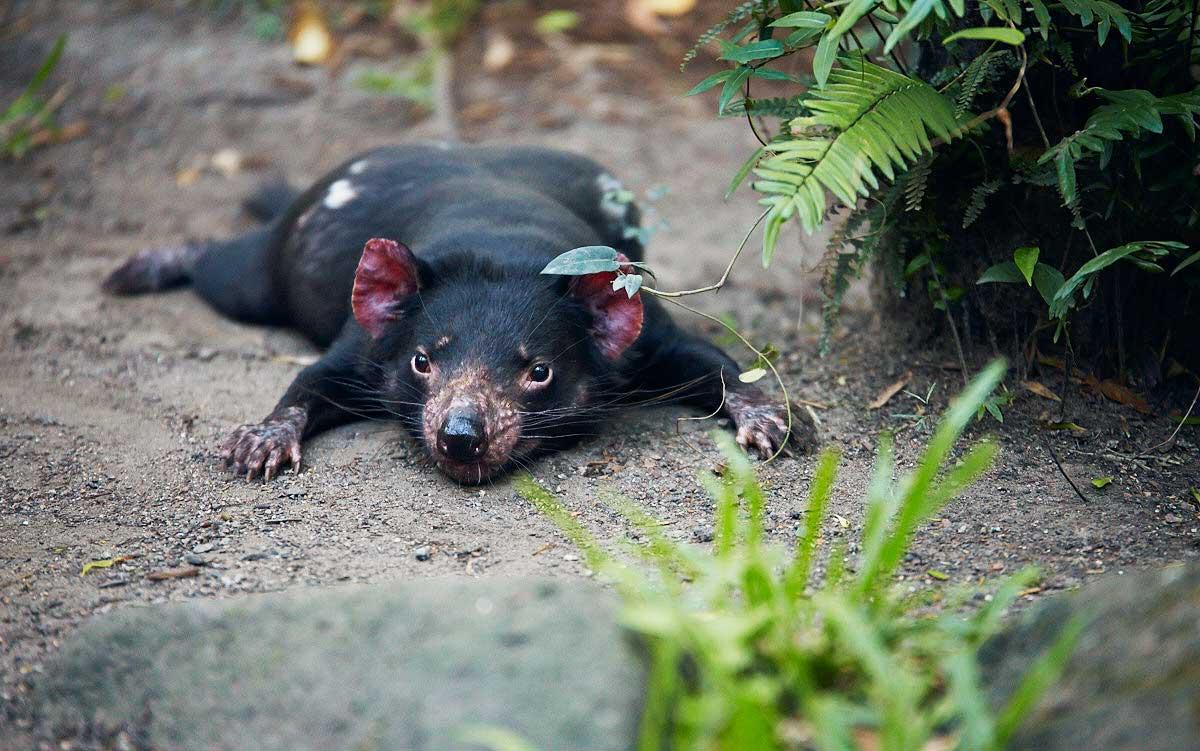 8 animaux que vous ne croiserez qu u0026 39 en australie