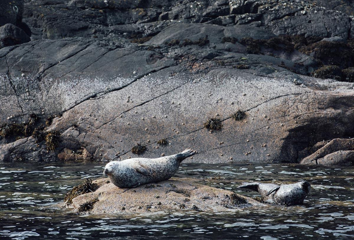 ou voir des phoques en ecosse