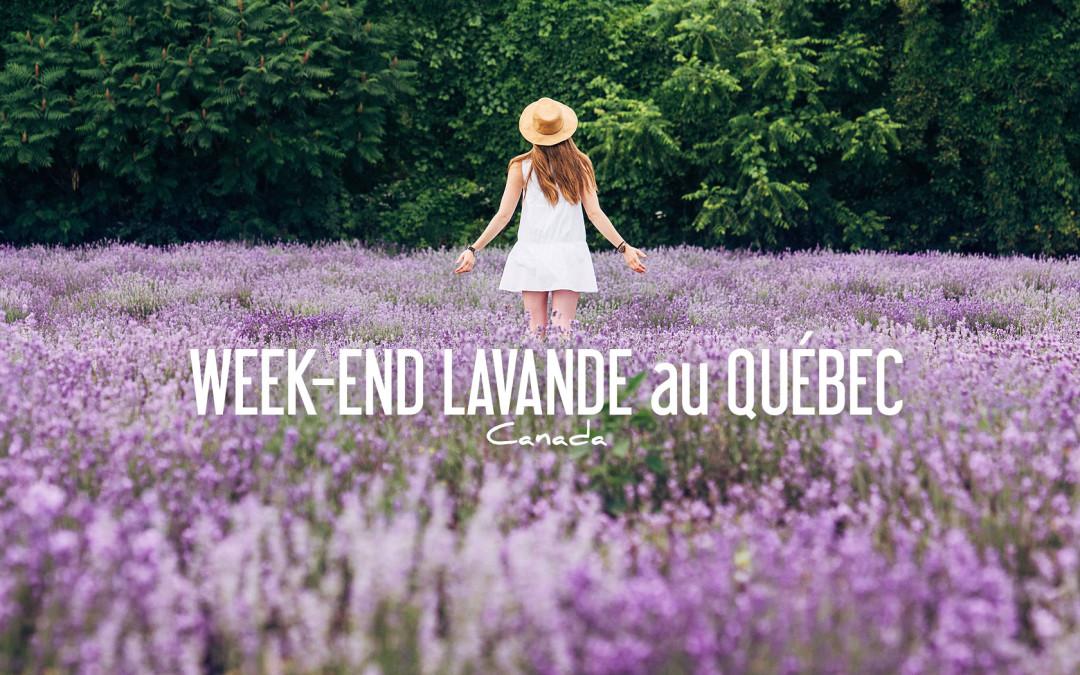 CANADA | Voir de la LAVANDE au QUEBEC, c'est possible!