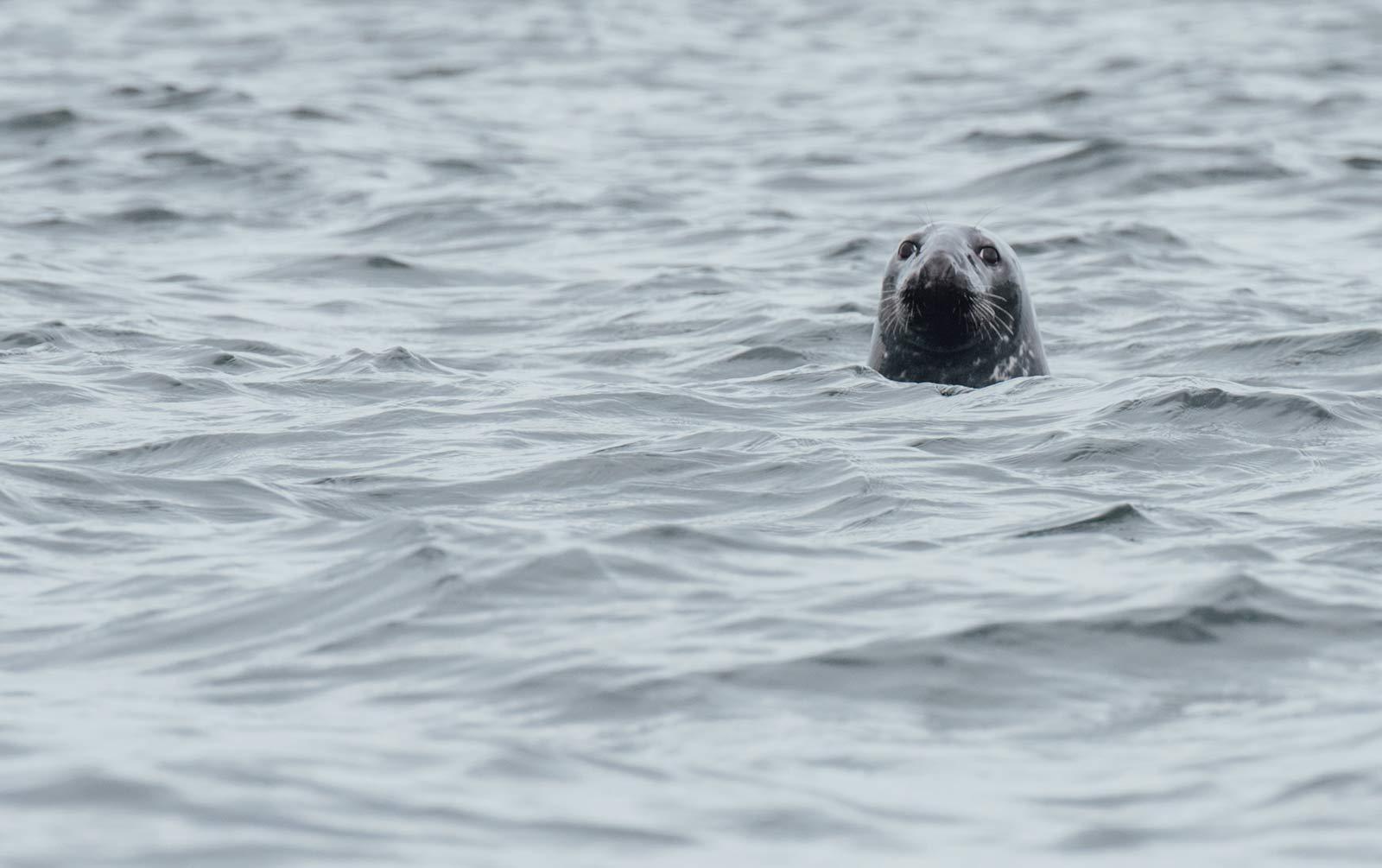 ou voir des phoques canada