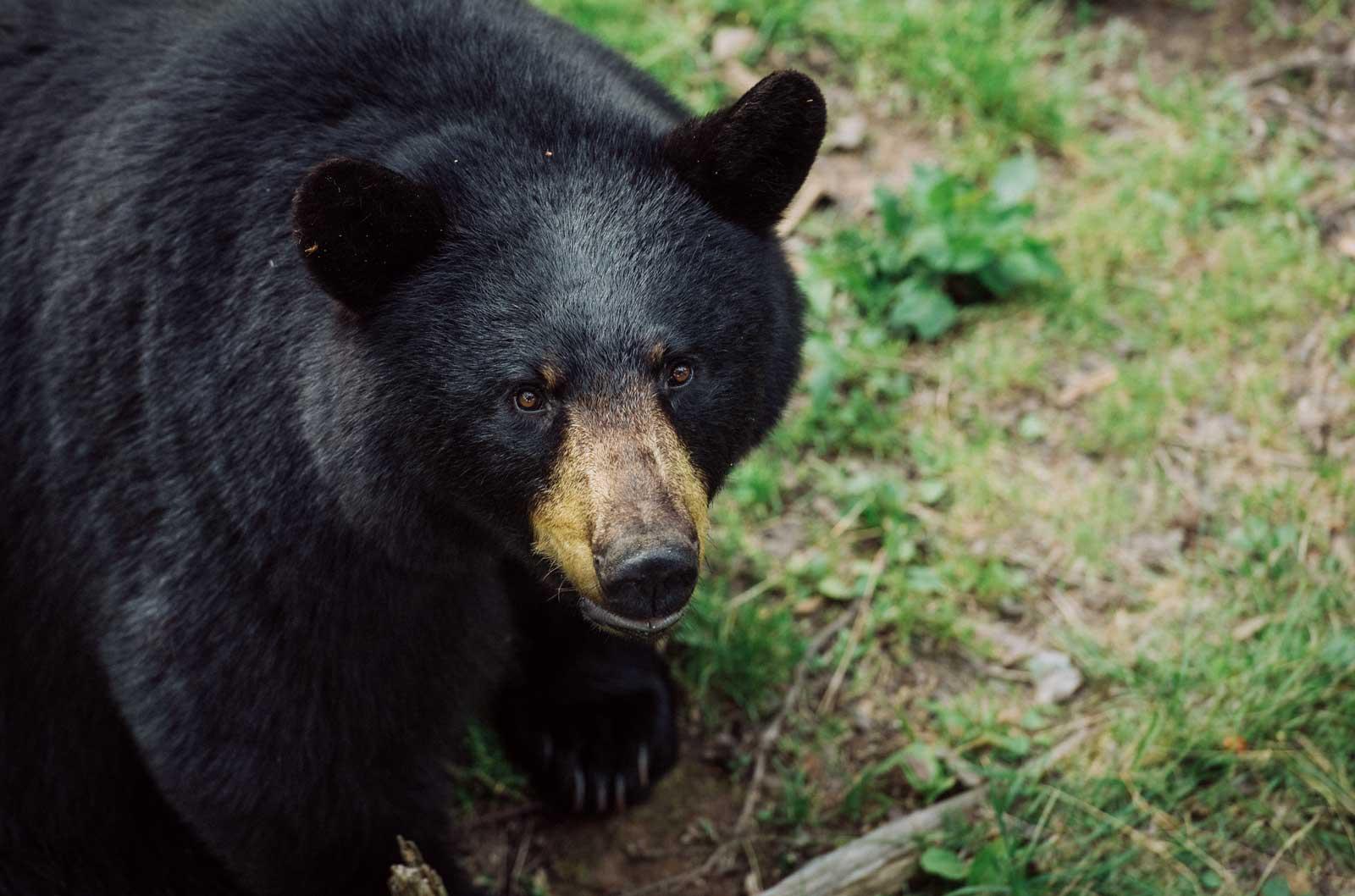 lieu pour voir de ours en liberté au canada