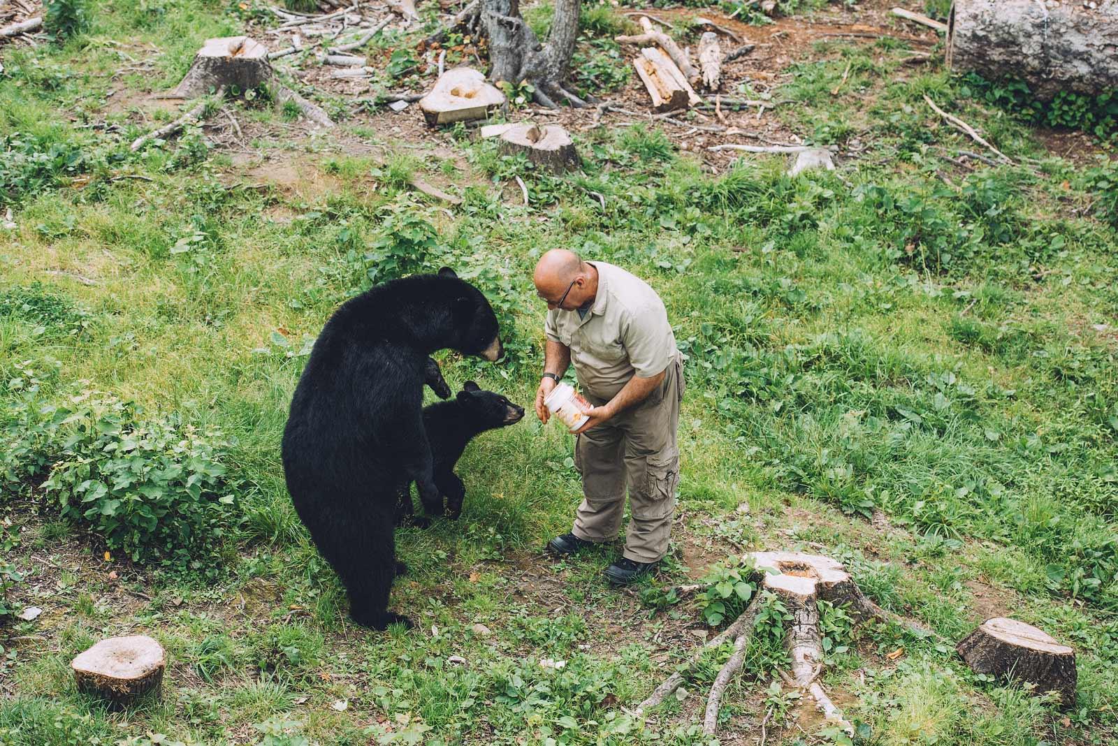 l'homme qui parle aux ours nouveau brunswick