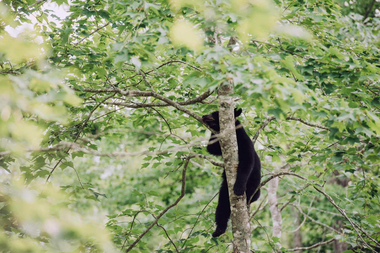 safari a l'ours nouveau brunswick