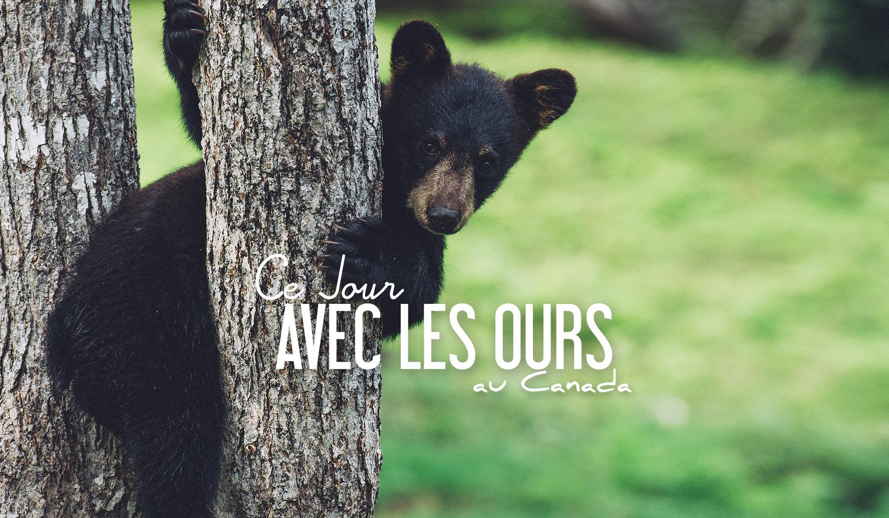 Ou voir des ours au canada dans la nature