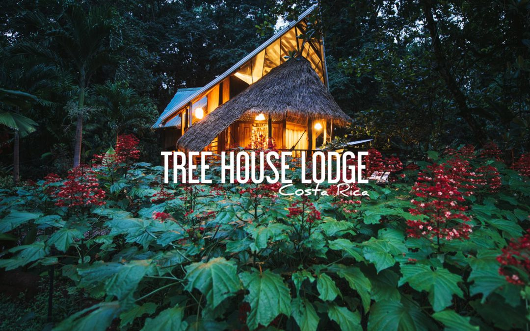 tree house lodge costa rica