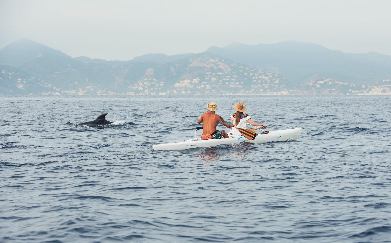 voir des dauphins cannes