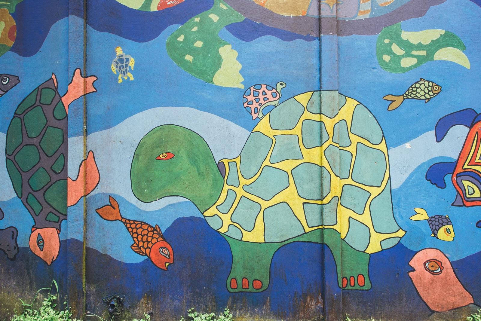 travailler avec les tortues au costa rica tortuguero