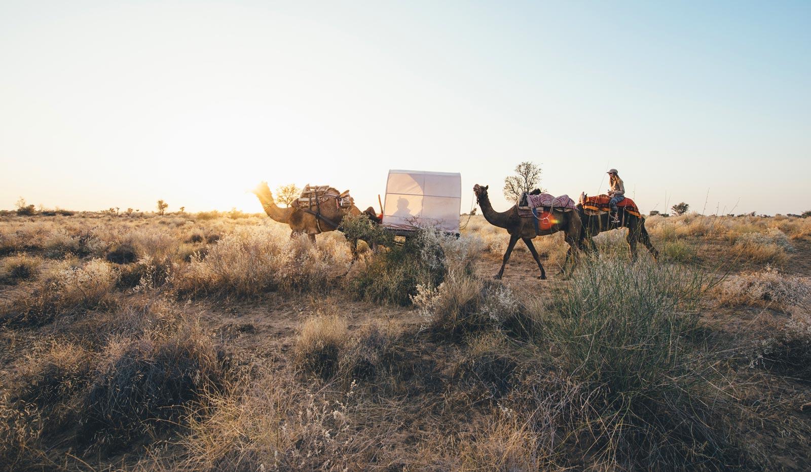 bikaner camel safari