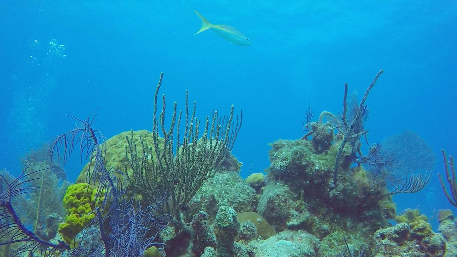 Plongée, Long Island, Bahamas