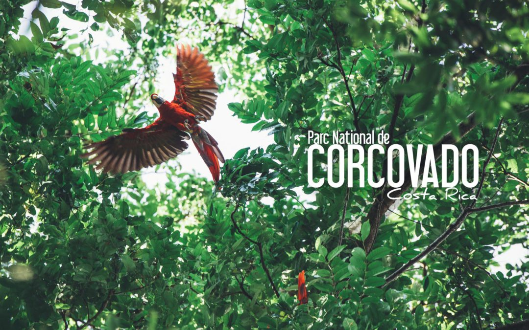 "COSTA RICA | ""INTO THE WILD"" DANS LE PARC NATIONAL DE CORCOVADO"