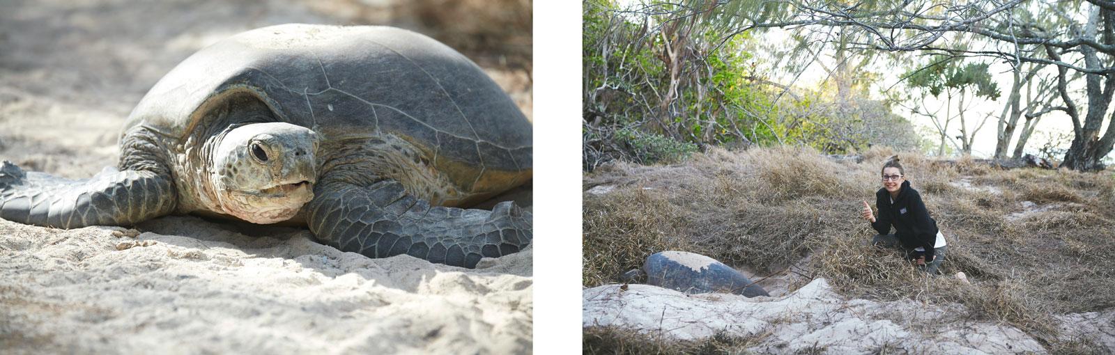 tortues marines ou les voir pondre?