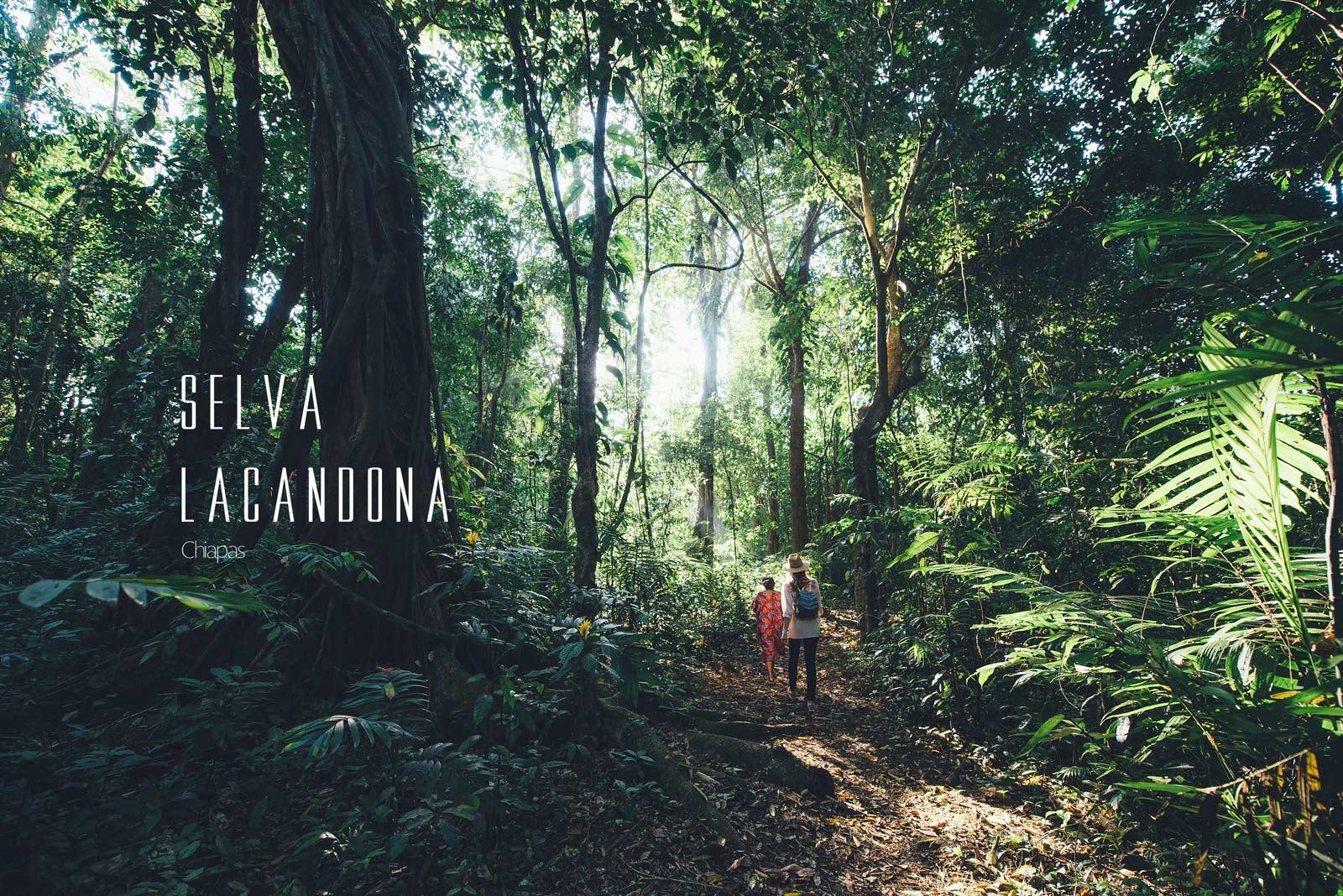 Foret Lacandona, Chiapas, Mexique