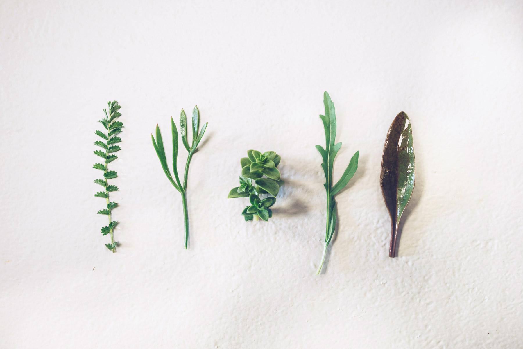 Les Jardins de la Mer, Algues
