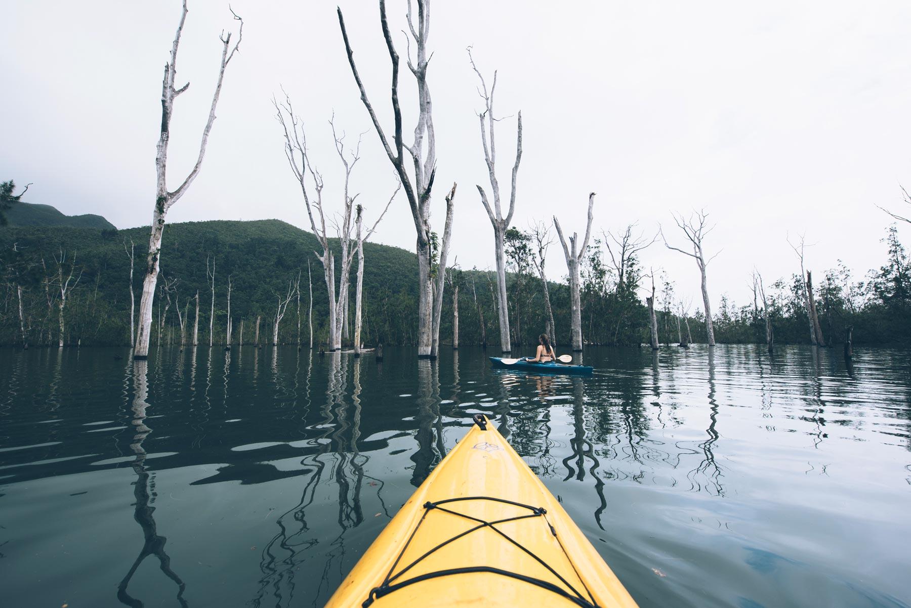 Forêt Noyée, Yaté, Nouvelle Calédonie