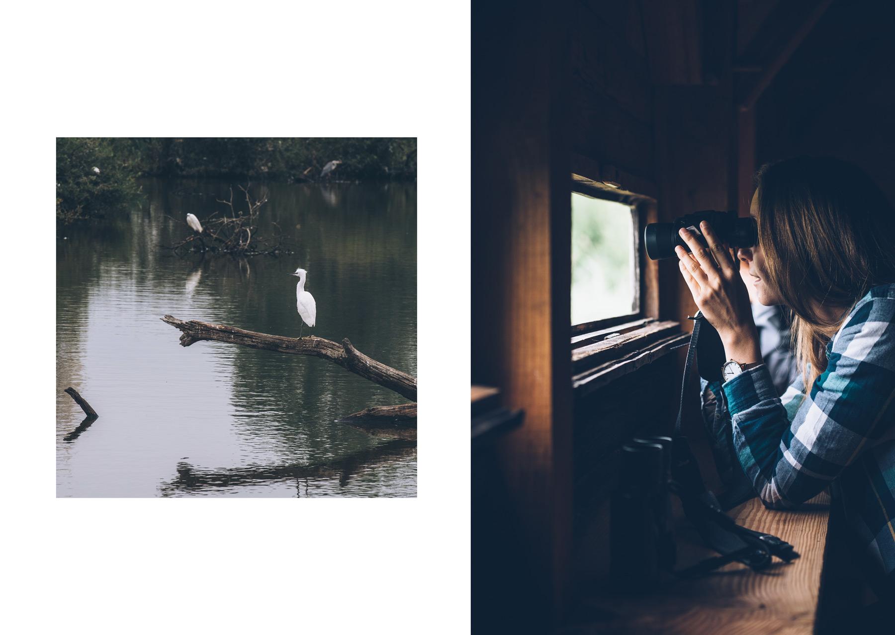 Observation d'oiseaux, Parc Naturel de la Brenne