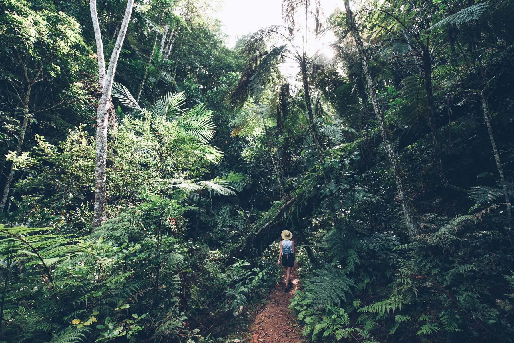 Parc des Grandes Fougères, Nouvelle Calédonie