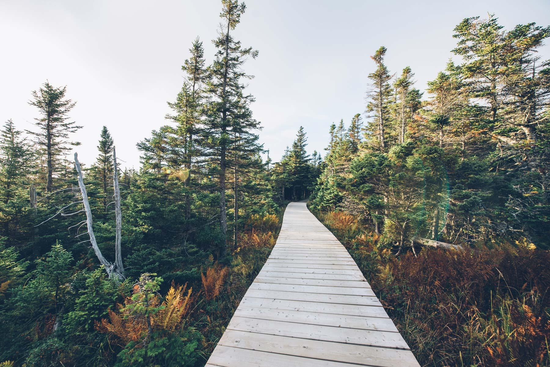 Skyline Trail, Canada