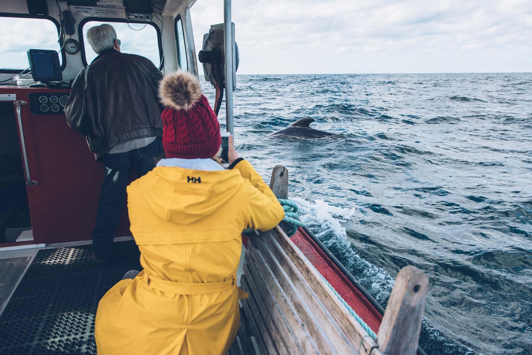 Sortie Baleine, Cap Breton