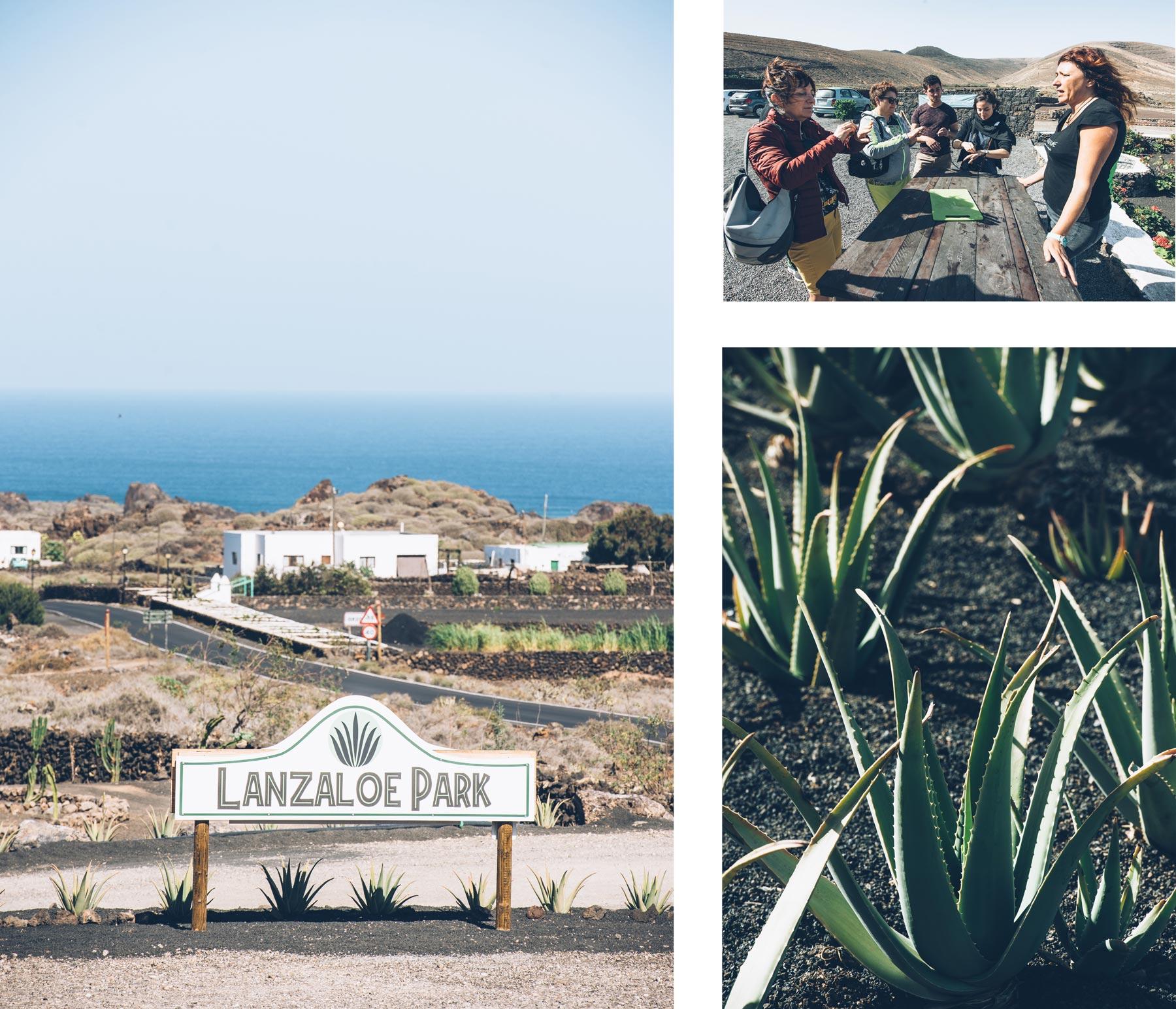 Lanzaloe Park, Aloe vera, Lanzarote