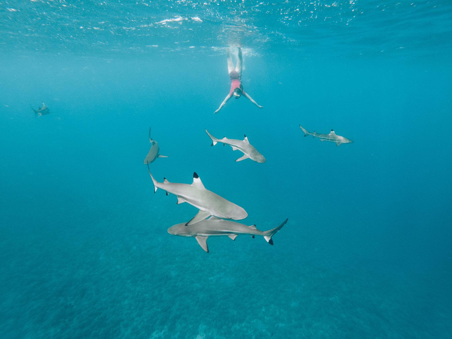 Bora Bora, Requins Pointe Noire