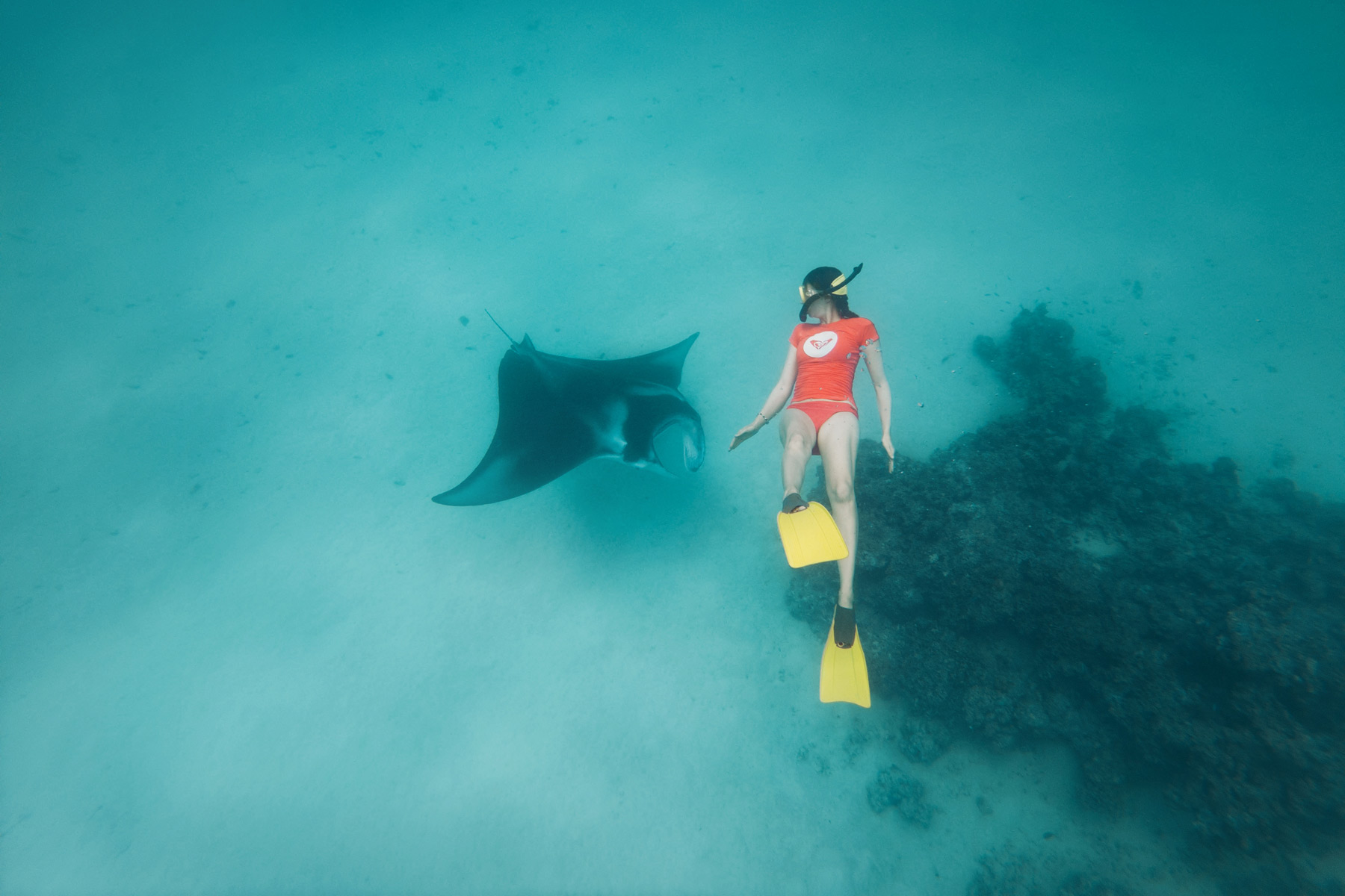 Raie Manta, Bora Bora, Polynésie Française