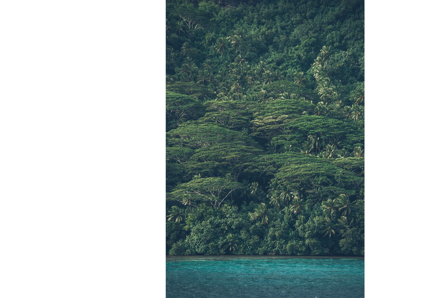 Tahiti, le vert
