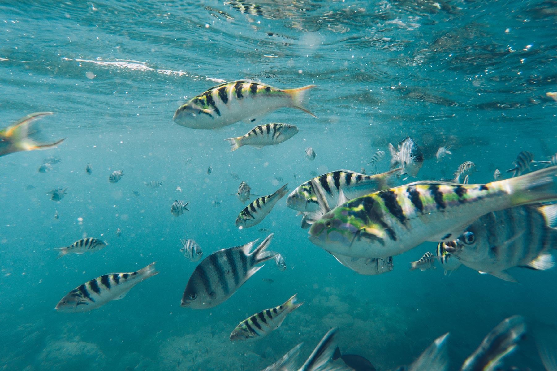 Meilleur spot de plongée, Rangiroa, Polynésie Française