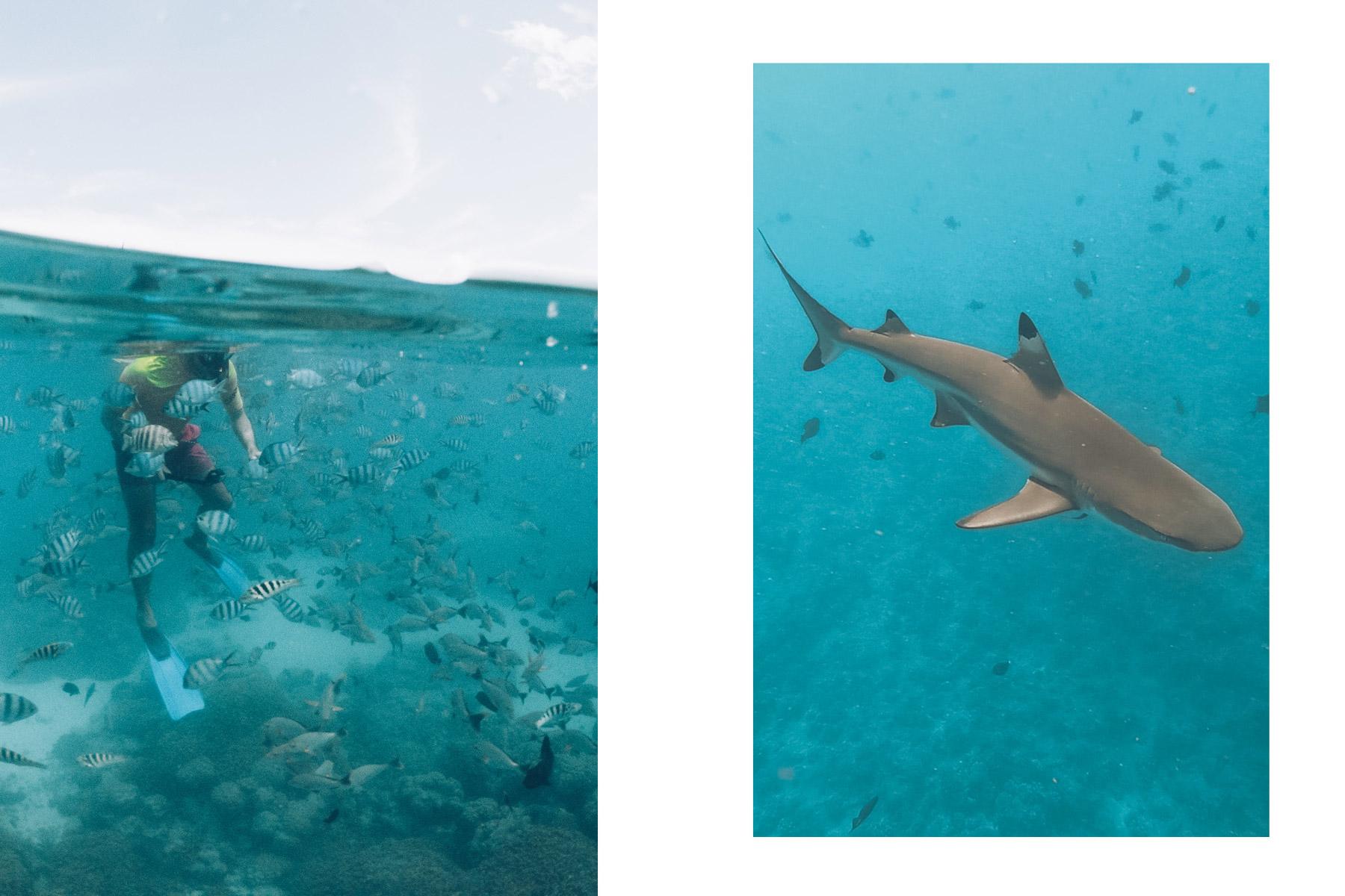 Snorkeling, Rangiroa, Polynésie Française