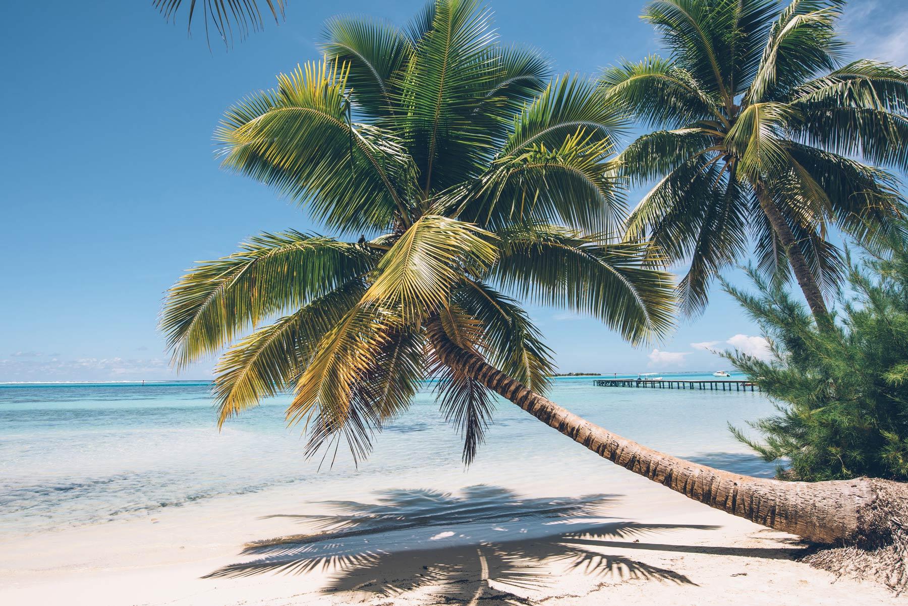 Tipanier, Moorea, Polynésie Française