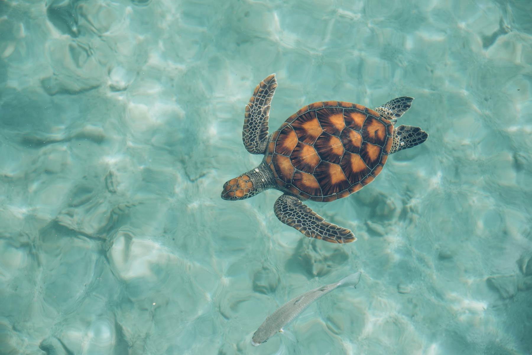 Centre des tortues, Moorea, Polynésie Française