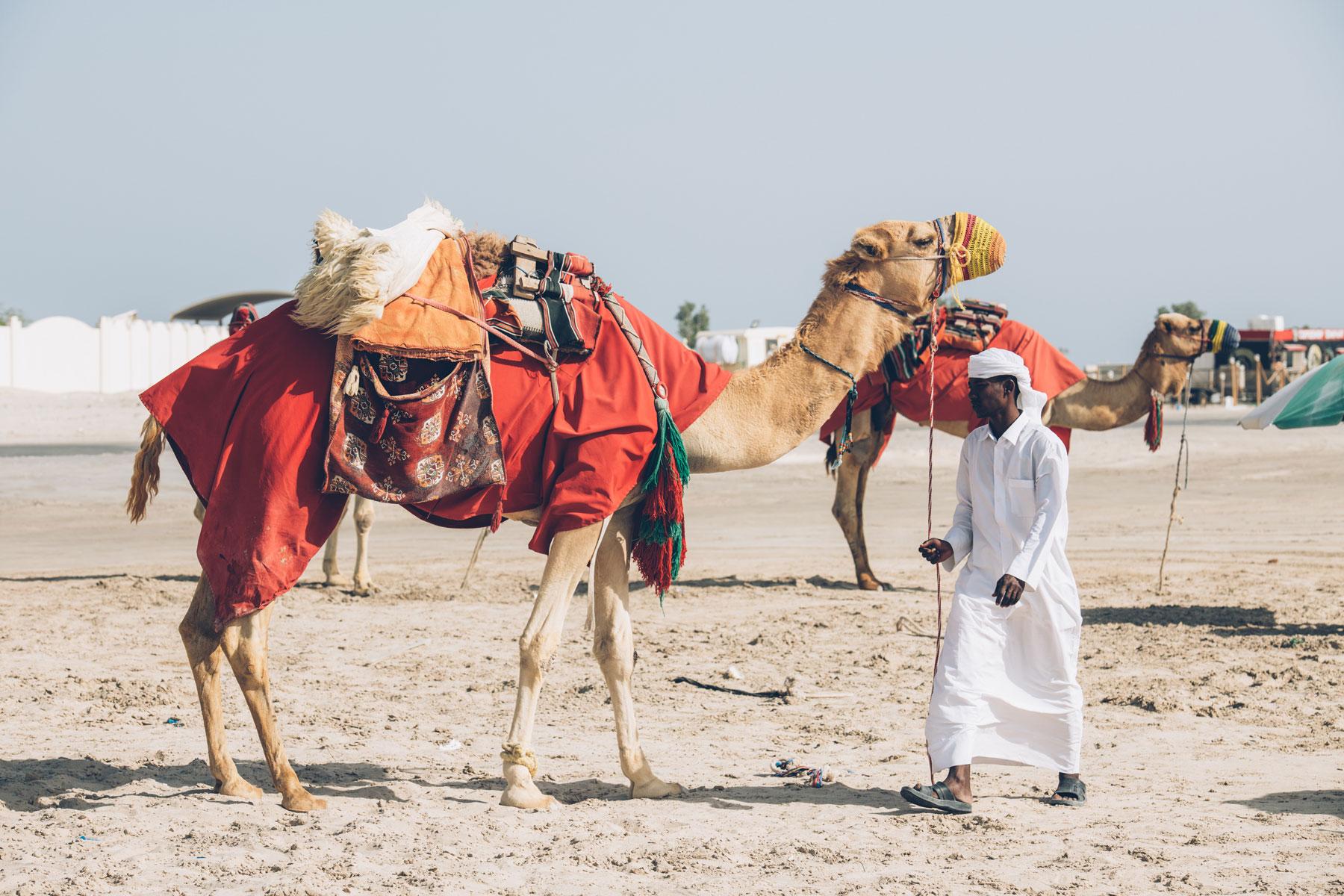Chameau Qatar