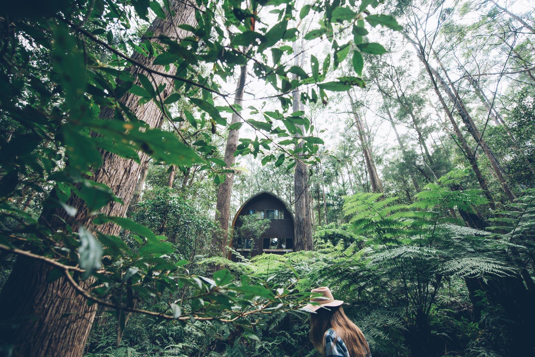 Springbrook National Park, Cabane au milieu de la forêt